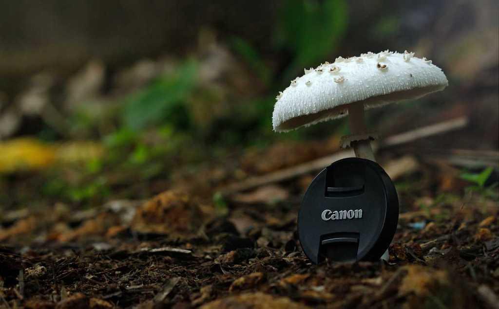 Canon EOS 4000D photo