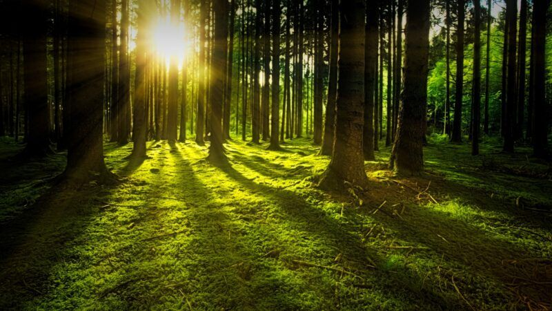 Sun flare in the woods