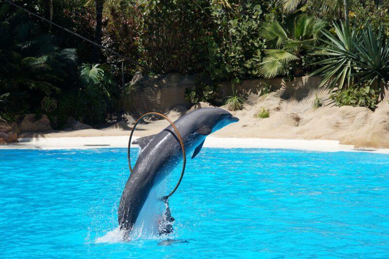 Dolphin at Loro Parque in Tenerife