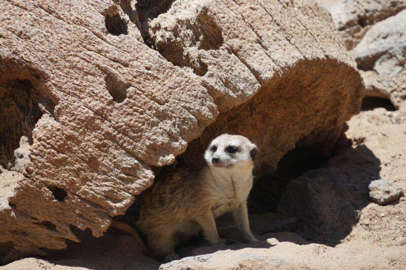 Lemur at Jungle park in tenerife