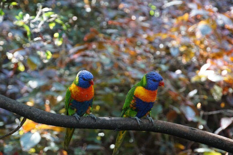 Parrots at Loro Parque in Tenerife