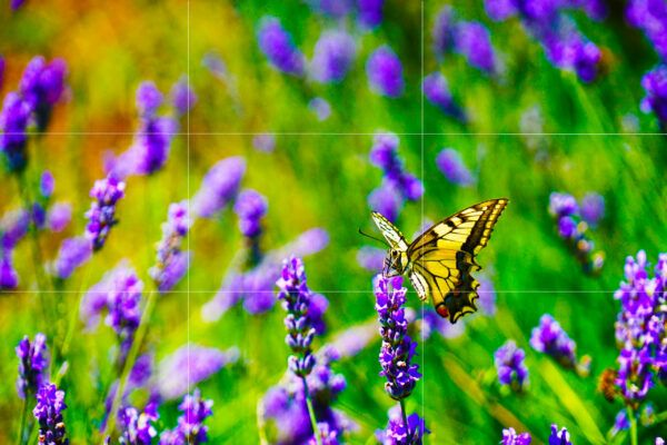Rule of thirds butterfly image