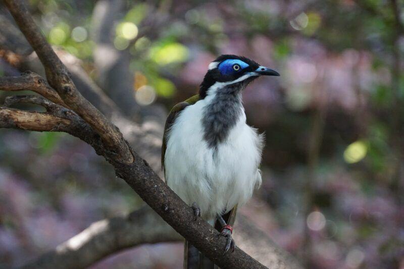 Bird at Loro Parque in Tenerife