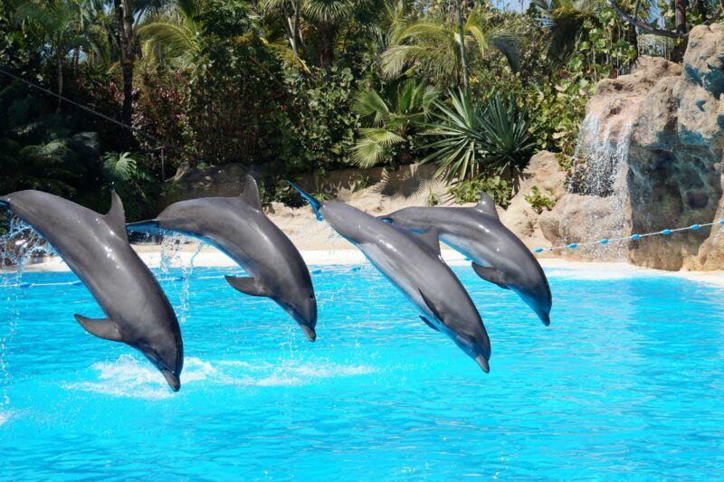 Dolphins at Loro Parque in Tenerife