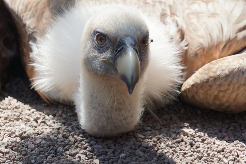 Jungle park vulture