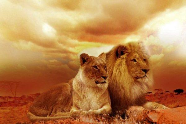 Lions relationship