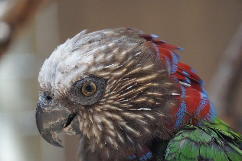 Jungle park parrot