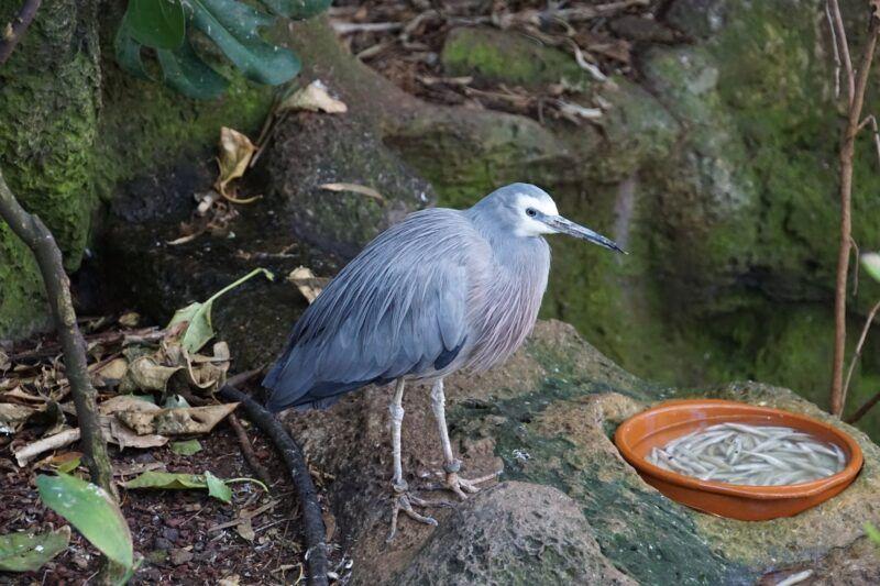 Heron at Loro Parque in Tenerife
