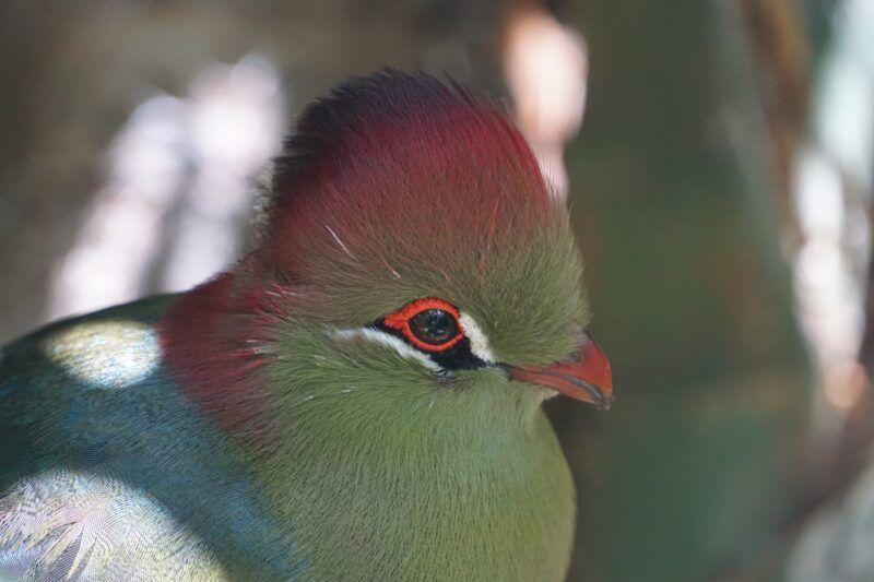 Jungle park colorful bird