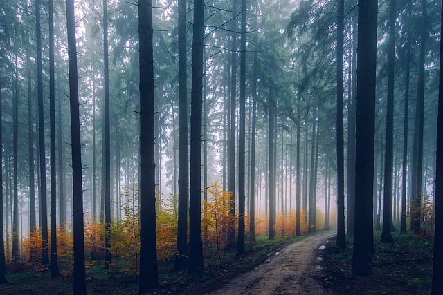 landscape in forest on foggy weather