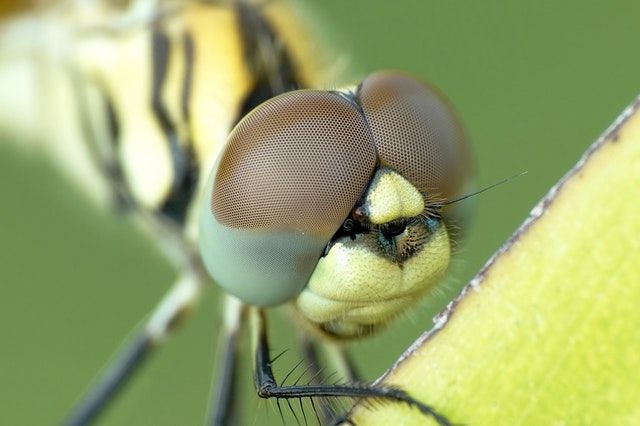 close up insect head
