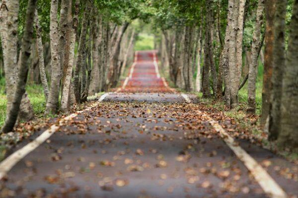 Shallow depth field photography road