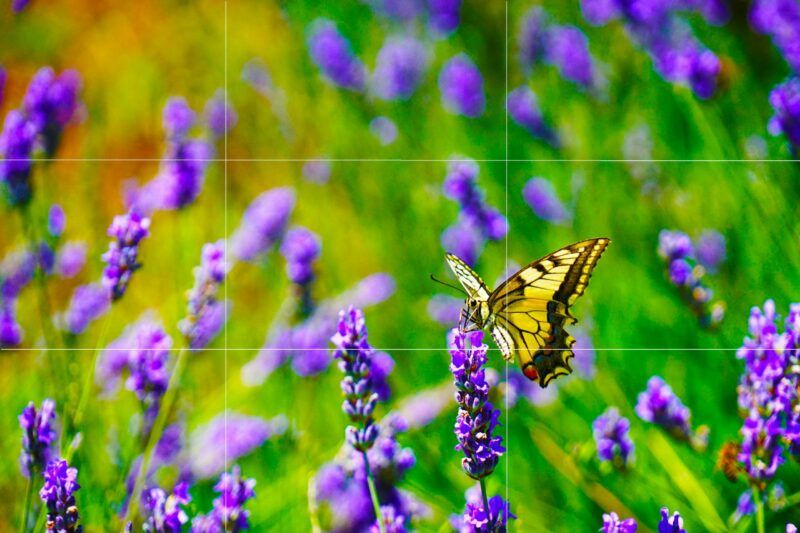 Rule of thirds butterfly