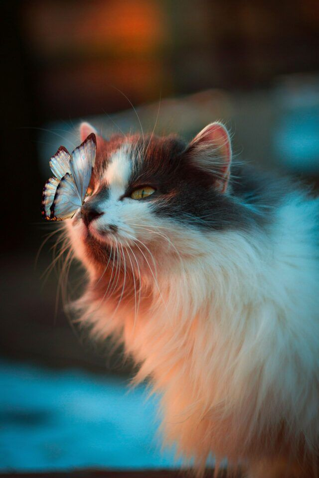 conceptual photography butterfly on cat nose