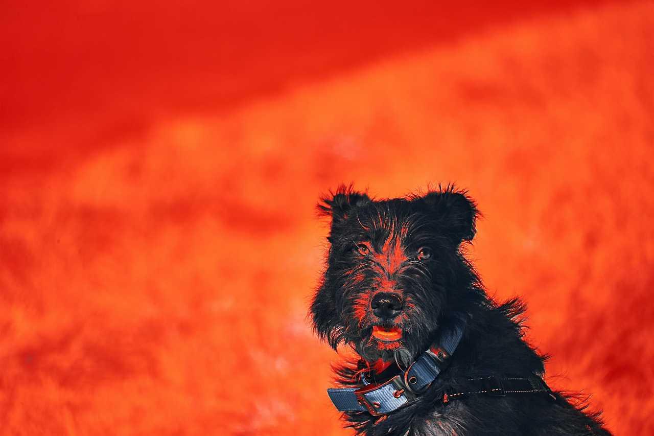 Infrared dog portrait