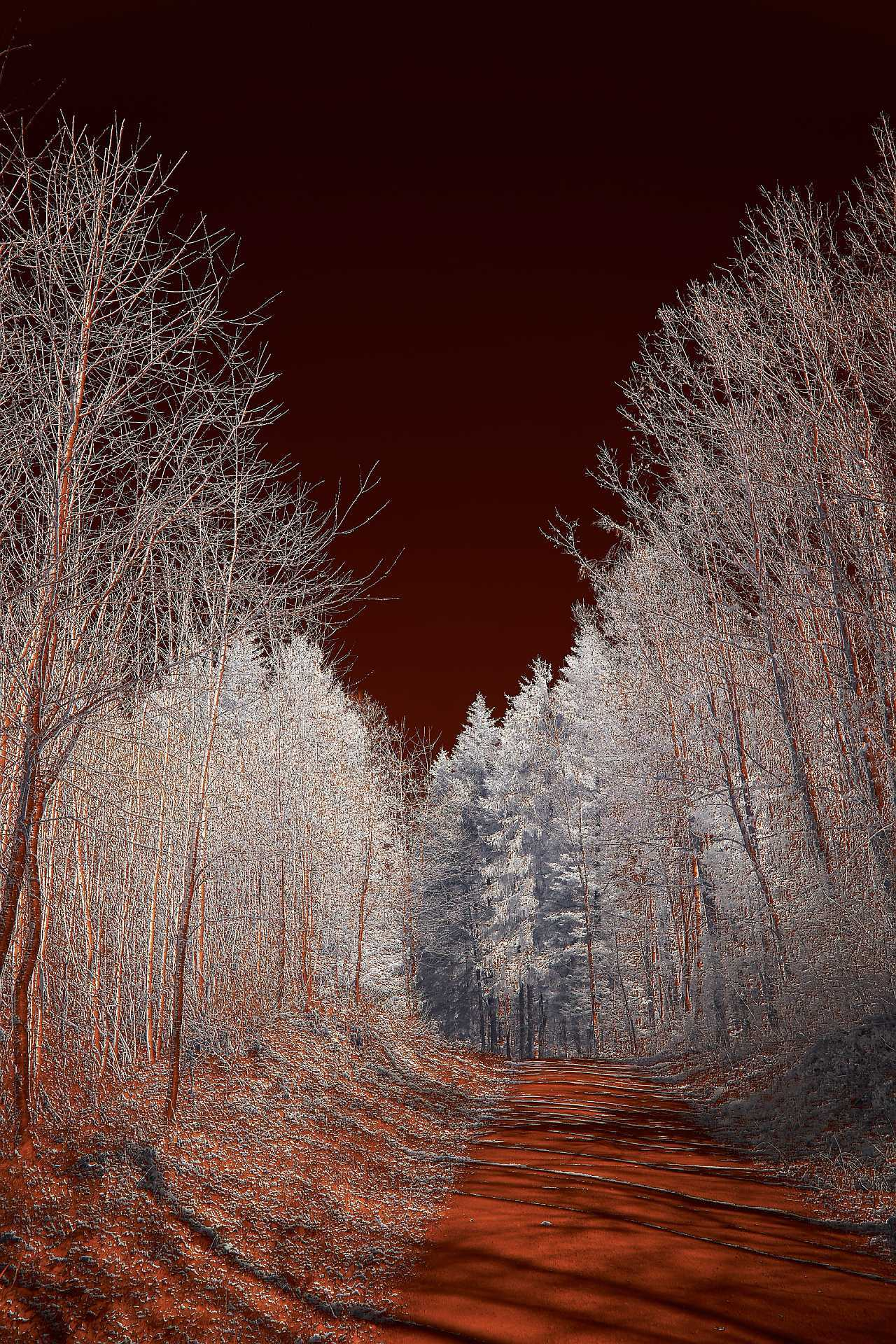 Infrared image with forest
