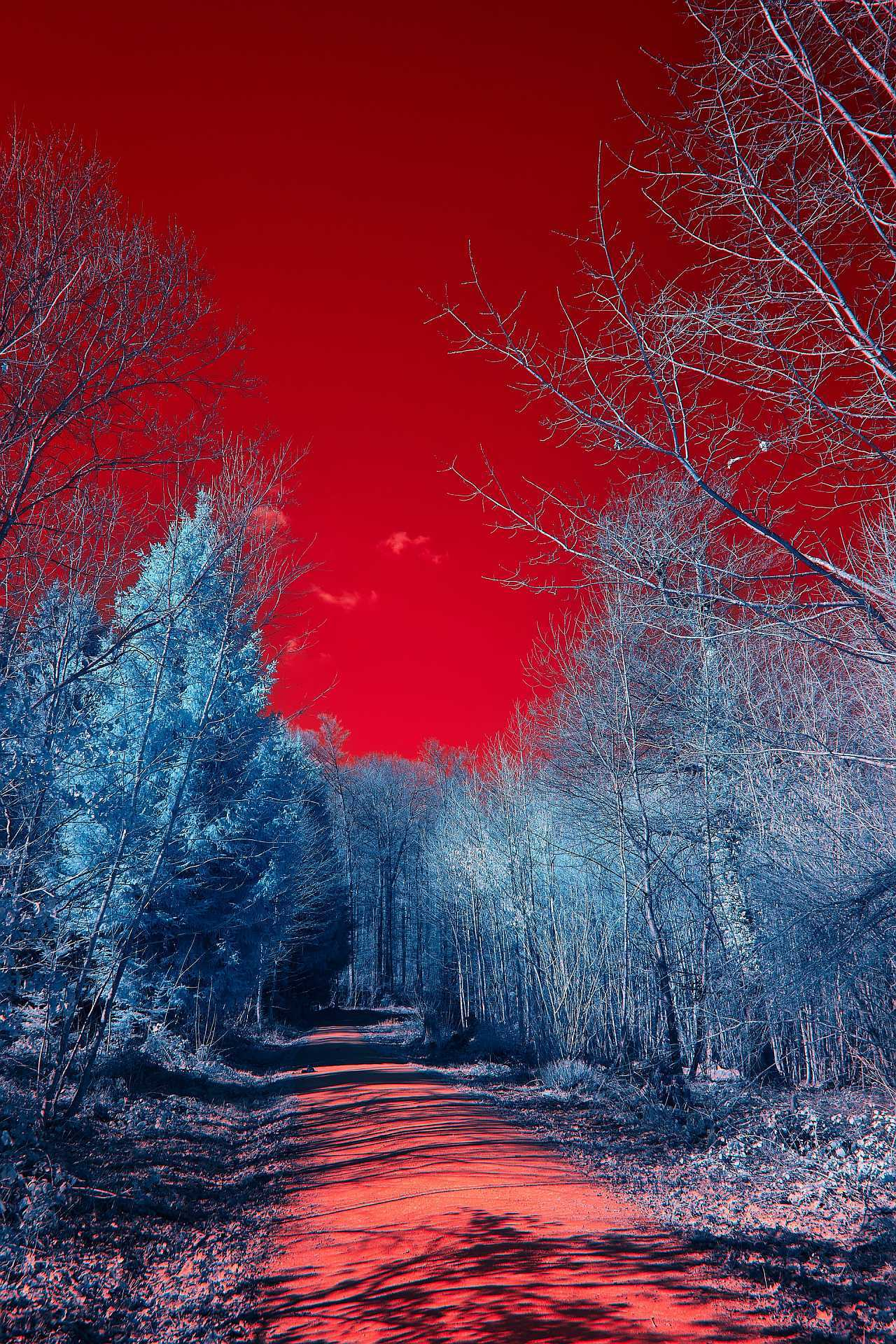 Infrared image with trees
