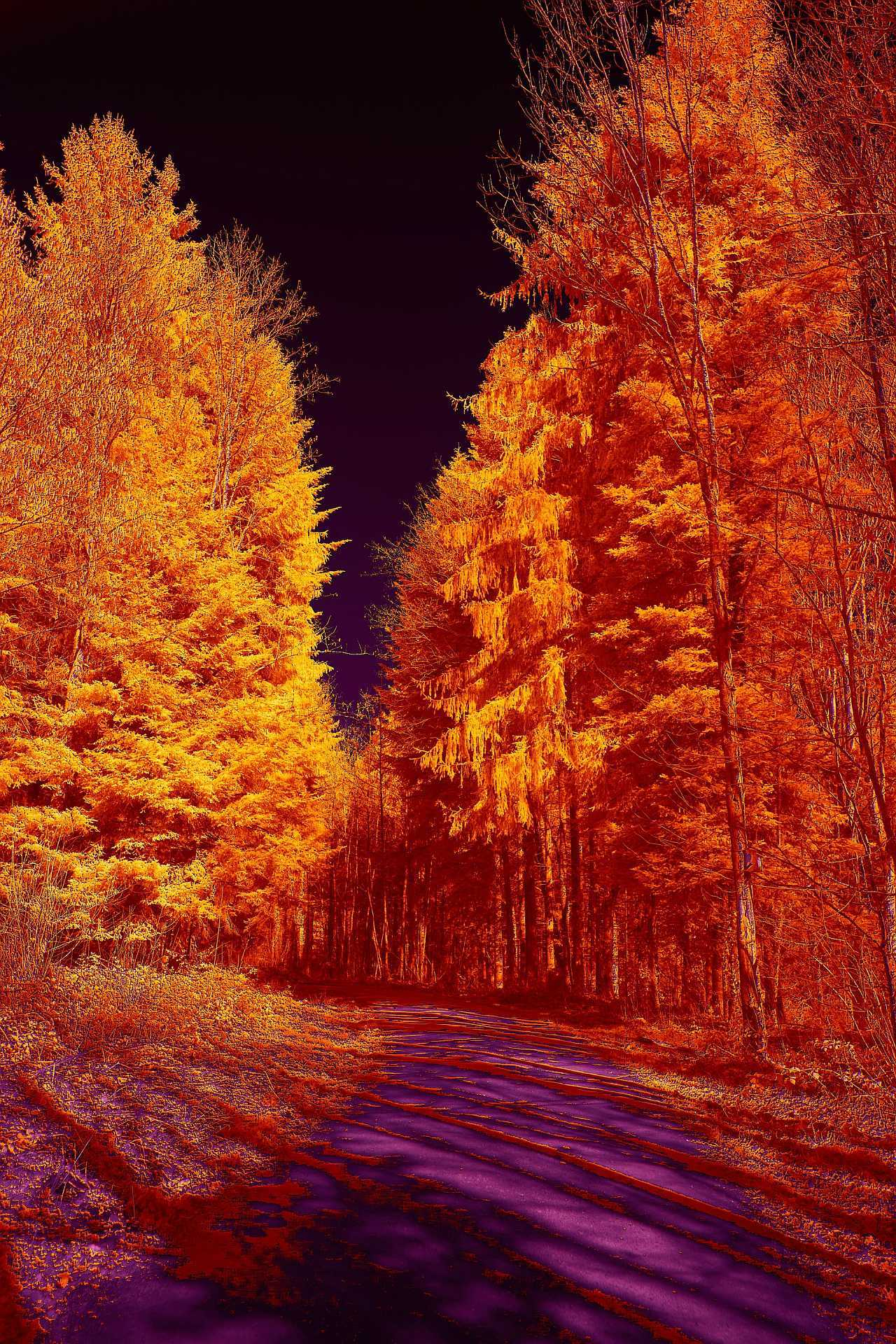 Infrared path in the woods