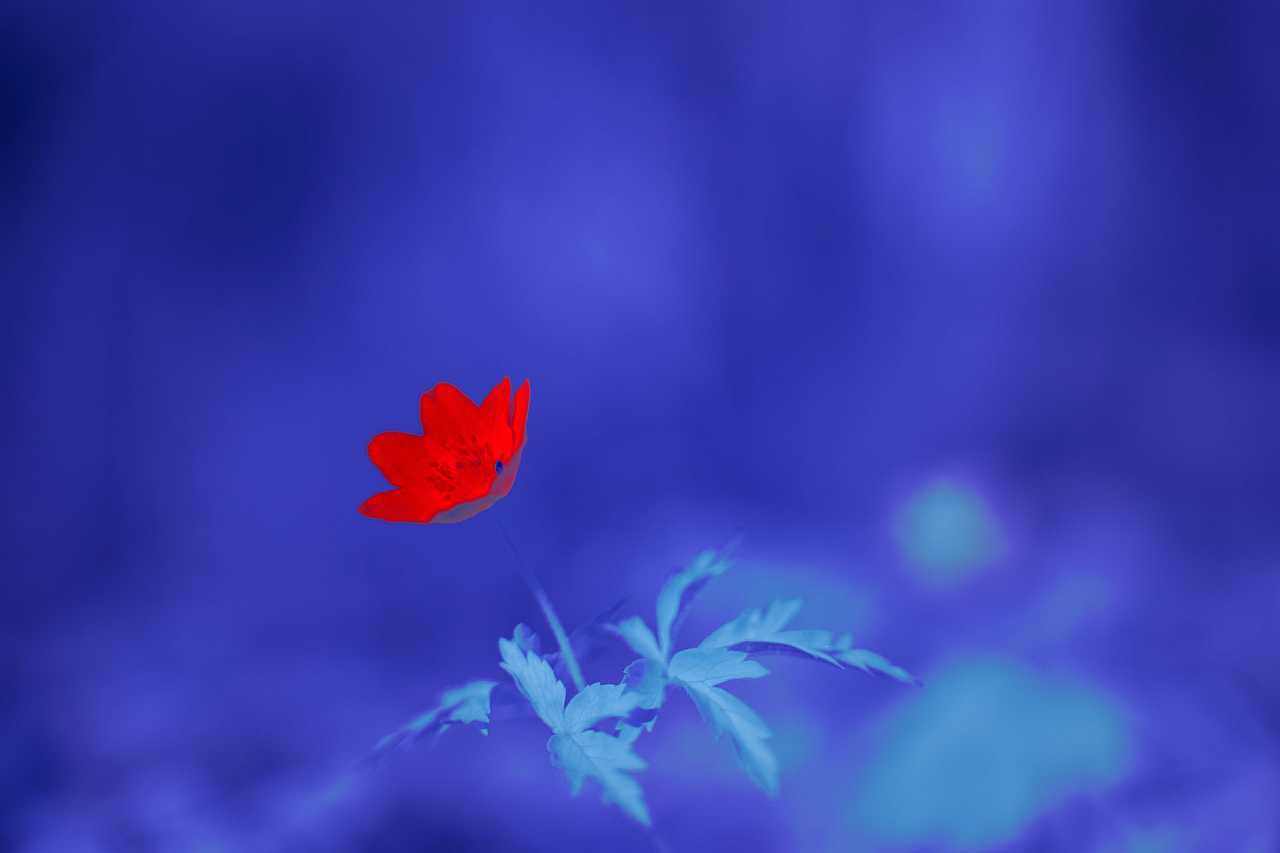Infrared photo with a flower