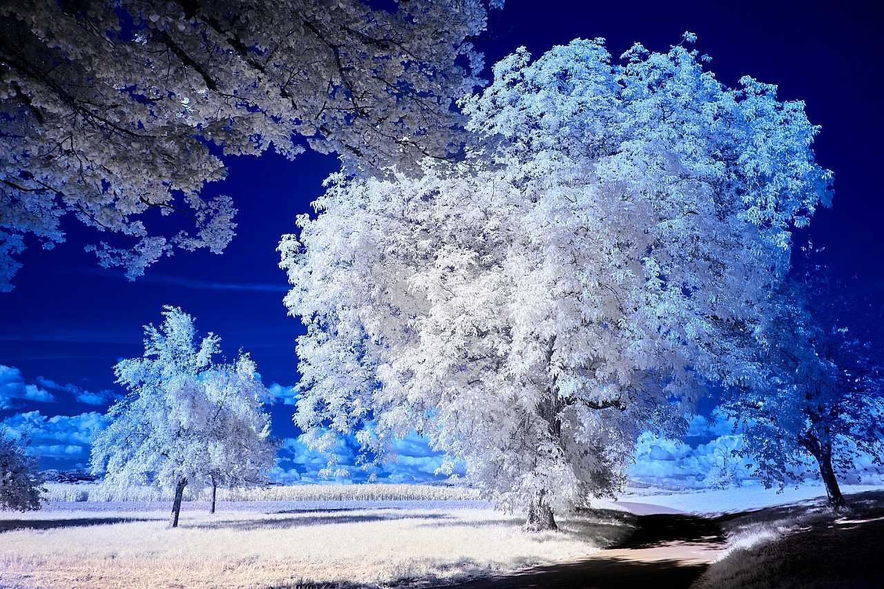 Infrared photo with trees